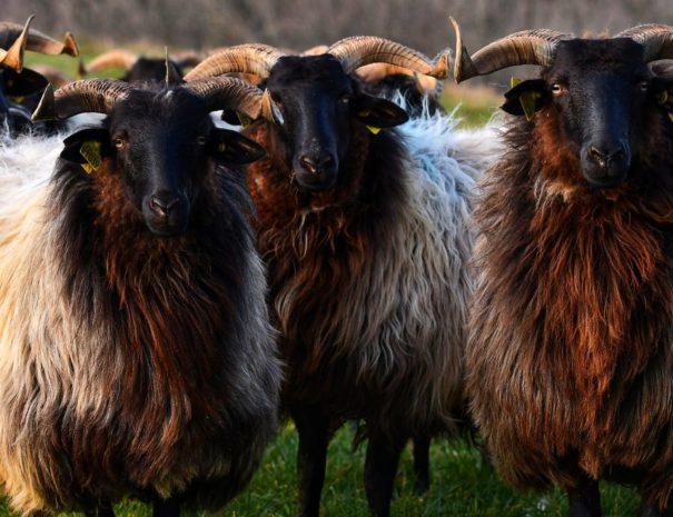 Visite degustation gourmande Pays Basque | Txiki Combi Pays Basque