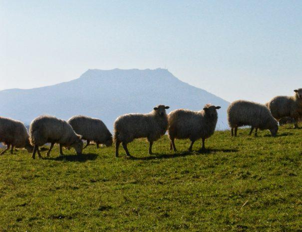Manex vue sur la rhune - tour original du Pays basque