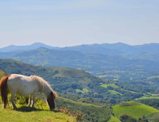 Visite guidée côté Montagne Pays Basque - Txiki Combi