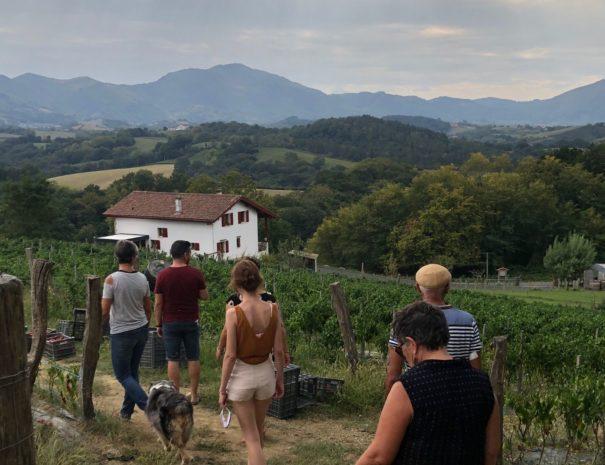 Txiki tour gourmand - visite gourmande pays basque