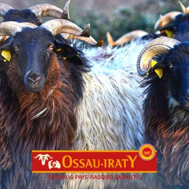 Ossau Iraty Tour | Txiki Combi Pays Basque